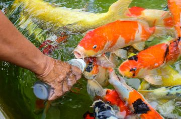 Fish Food 101
