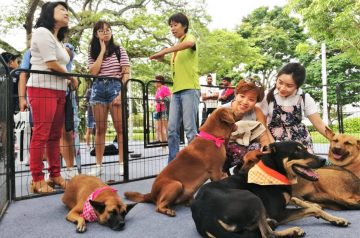 Get Free Pet Microchipping, Health Checkups & Pet-Friendly Fun at NParks' Pets' Day Out Event!