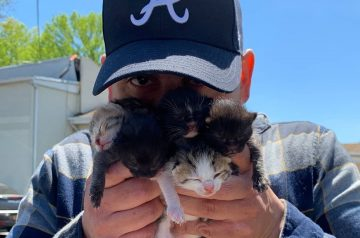Paul the Cat Guy and 4 Local Adoption Drives Besides SPCA