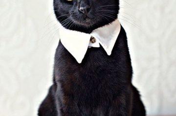 Ramadan Cat Couture