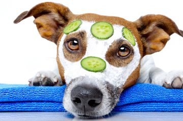 Roots Technologies' Guide to Natural & Wholesome Products for Pets
