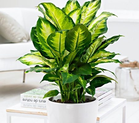 12 Common House Plants In Singapore That Are Poisonous For Pets