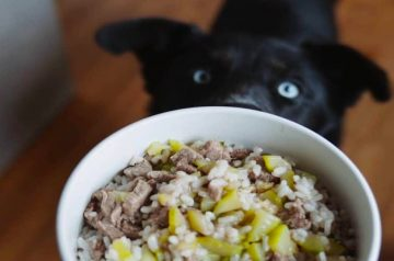What Should I Feed My Dog? Different Dog Food Diets And Their Benefits