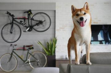 When A Dog And Cat Lover Gets Together: The Best Breeds For Both