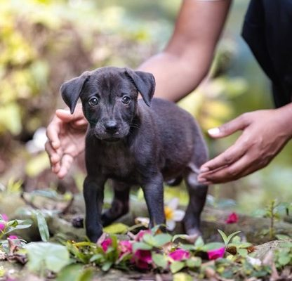 Adopt or Shop? Differences Between Pet Purchasing and Adopting