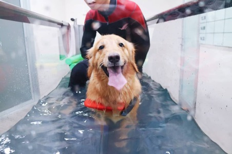 Canine Hydrotherapy: What It Is and Why It's Worth It