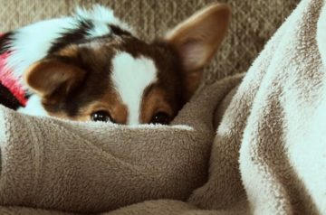 Dog Care 101: How to Calm a Dog in a Thunderstorm