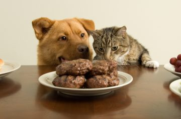 Eating Right: Pet Food Labels Explained