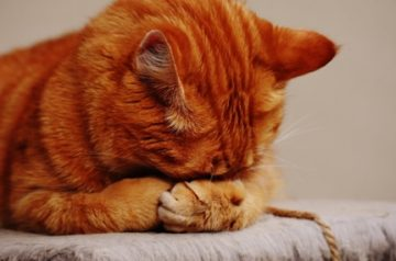 Forgetful Feline: 5 Indicative Signs of Dementia in Cats
