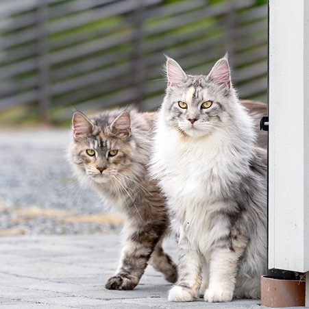 Friendly Felines: 5 Affectionate Cat Breeds