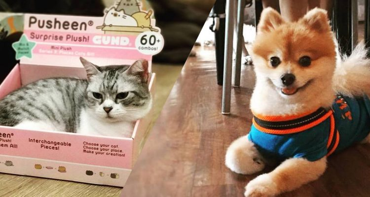 Furry Fun: 9 Cat, Dog and Pet-Friendly Cafes In Singapore