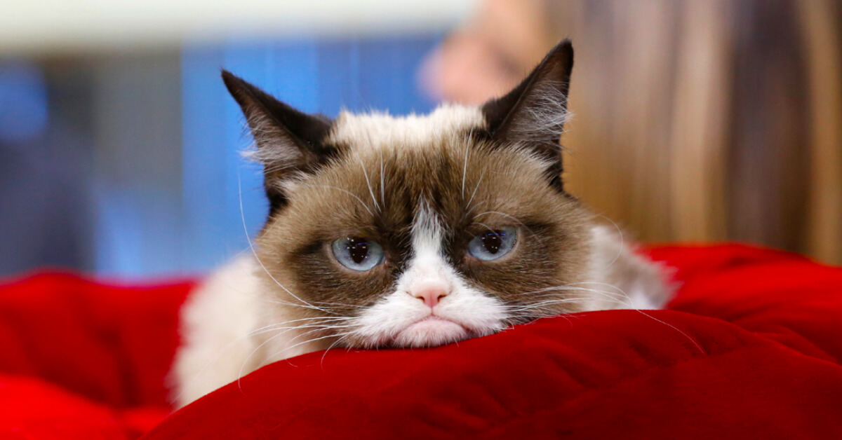Goodbye Grumpy Cat: The Internet's Most Beloved Feline Has Passed On