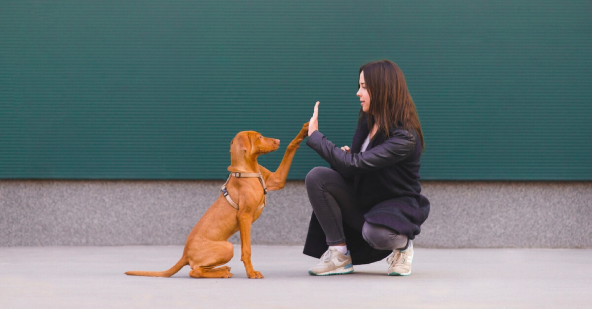 Handy Animal Handling Tips for all Pet Owners