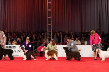 Haute Hounds: The Top Dog(s) of Beverly Hills 2019