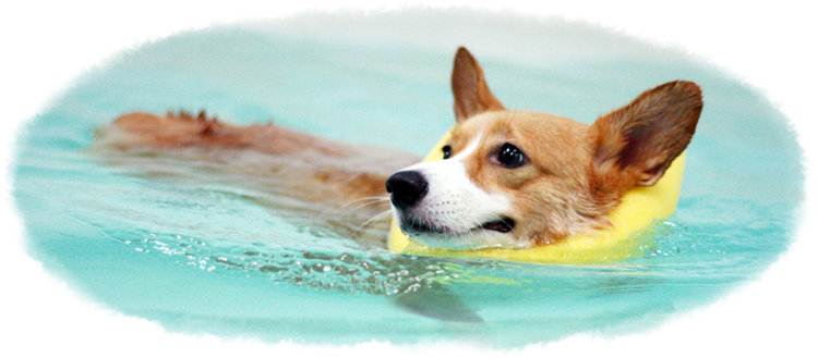 Guide For Top 3 Hydrotherapy Centres For Dogs In Singapore