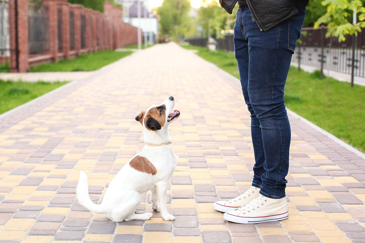 Life-Saving Commands That Your Dog Needs to Learn