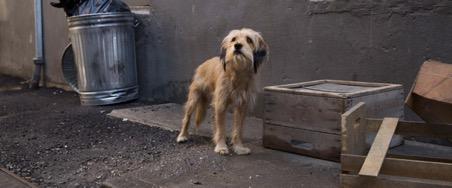 Pawllywood Stars: 7 Animal Actors We Love