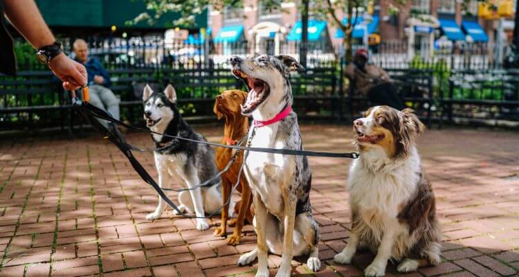 Choose Your Ideal Pet Boarding For Your Pets In Singapore