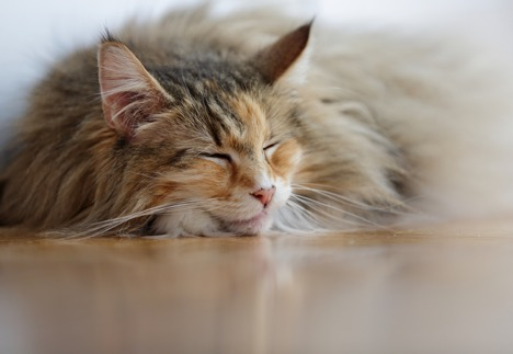 Pet Stroke Symptoms: Everything a Pet Owner Needs to Know