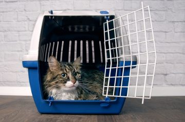 Ready to Hit the Road? Jet Set and Go With the Perfect Pet Carrier