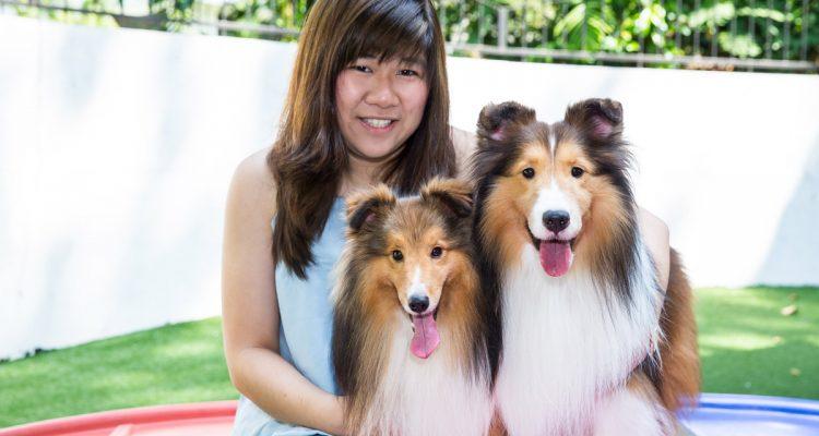 All About Shelties