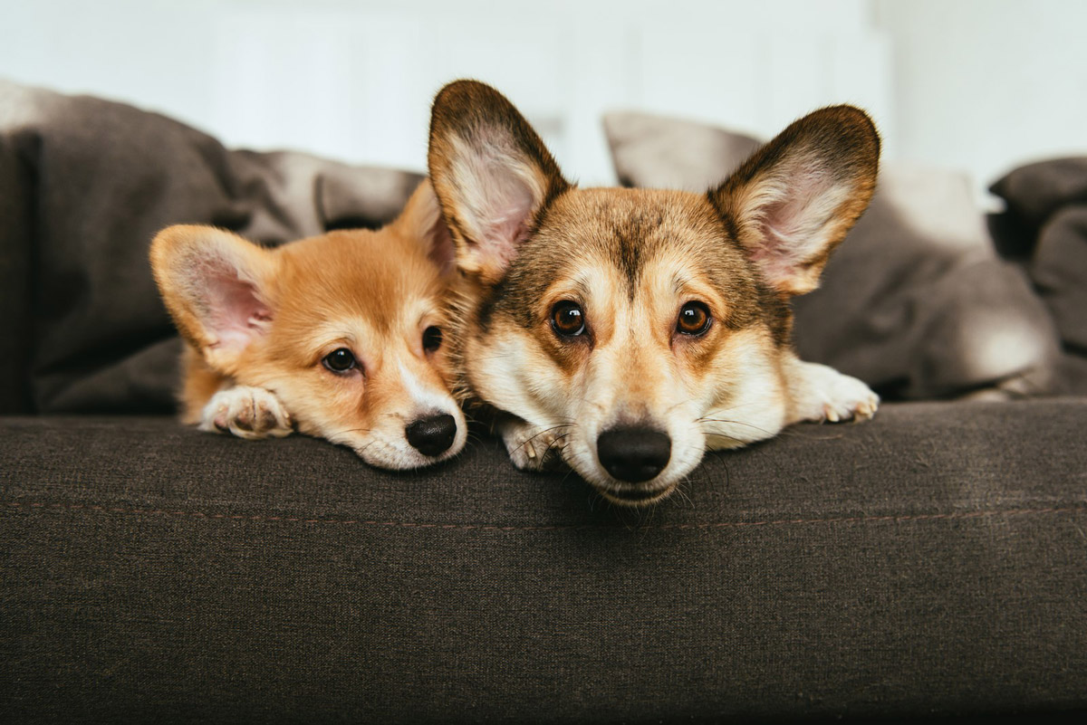 Signs that Your Pet is Lonely and How to Help
