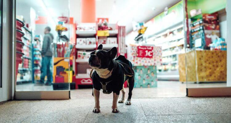 Guide To Online Pet Store & Pet Shop Directory In Singapore