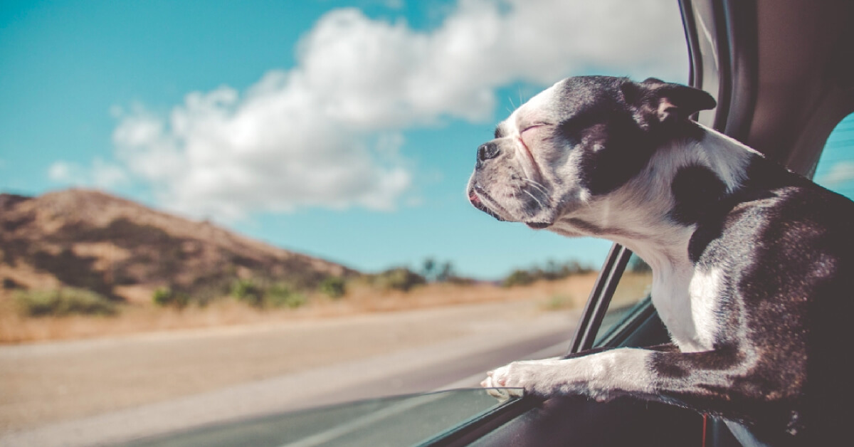 Super Senior: Preparing for Your Dog's Golden Years