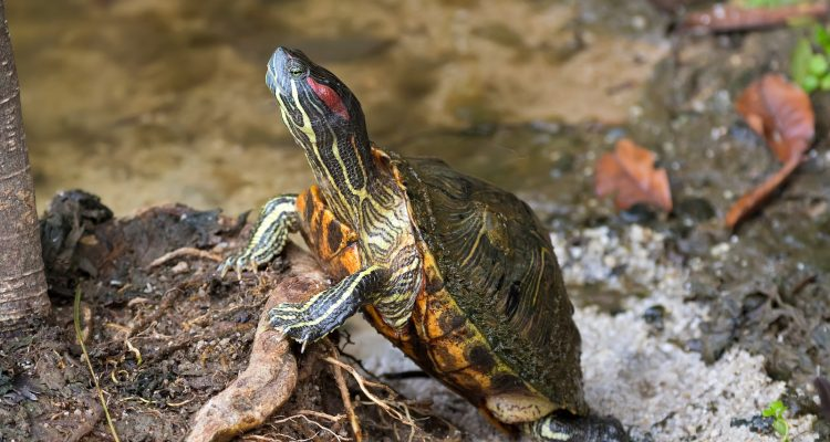 Terrapin Things: A Guide to Terrapin Care