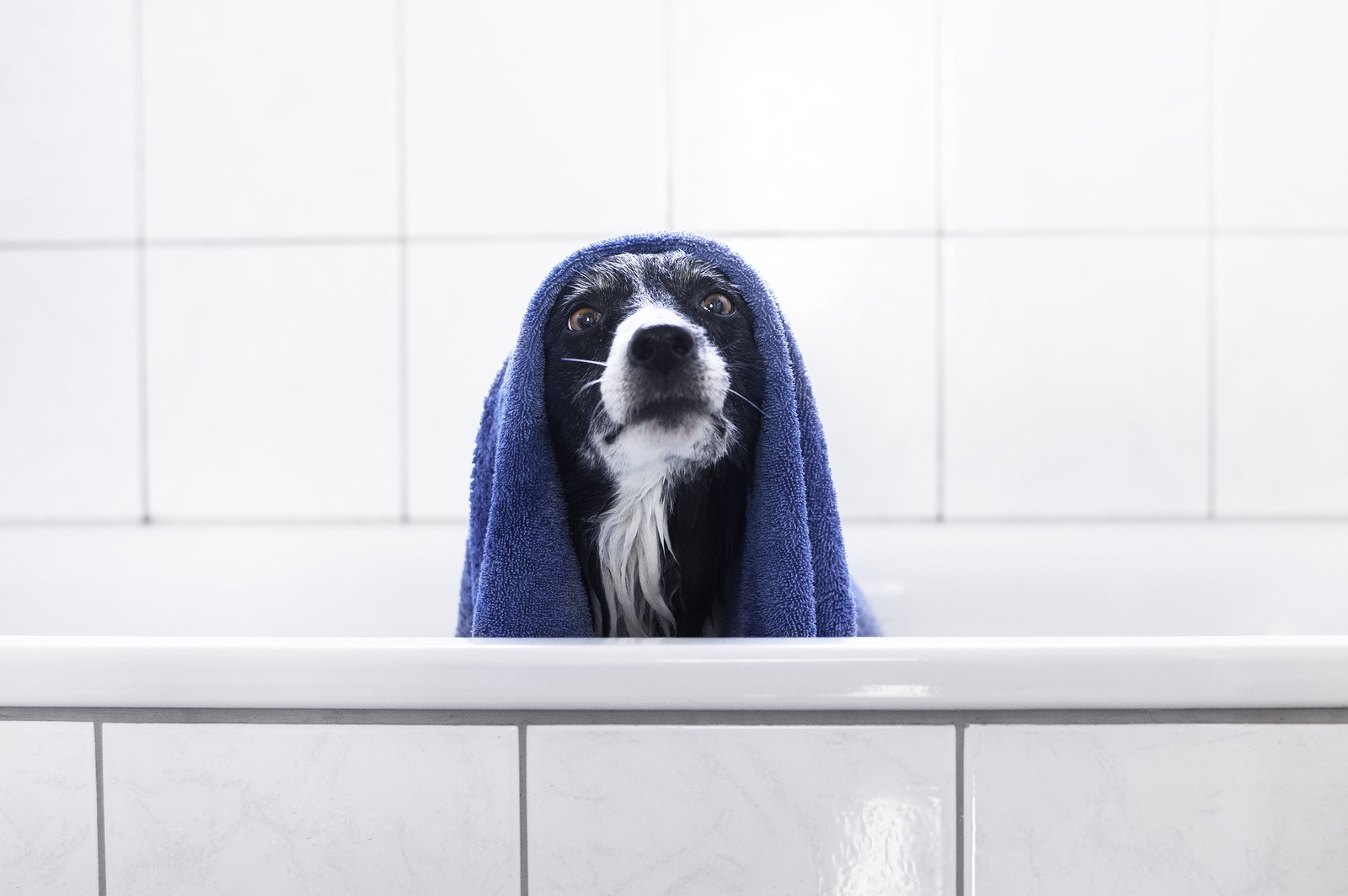 The Perks of Professional Pet-Grooming