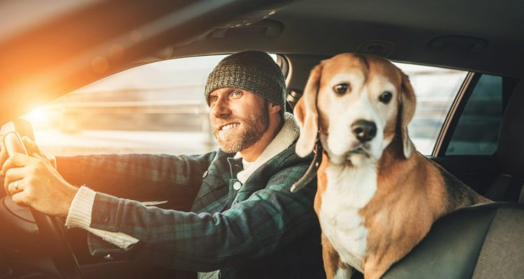 Up for a Road Trip with Your Furkid? Here Are 5 Tips for a Safe Ride