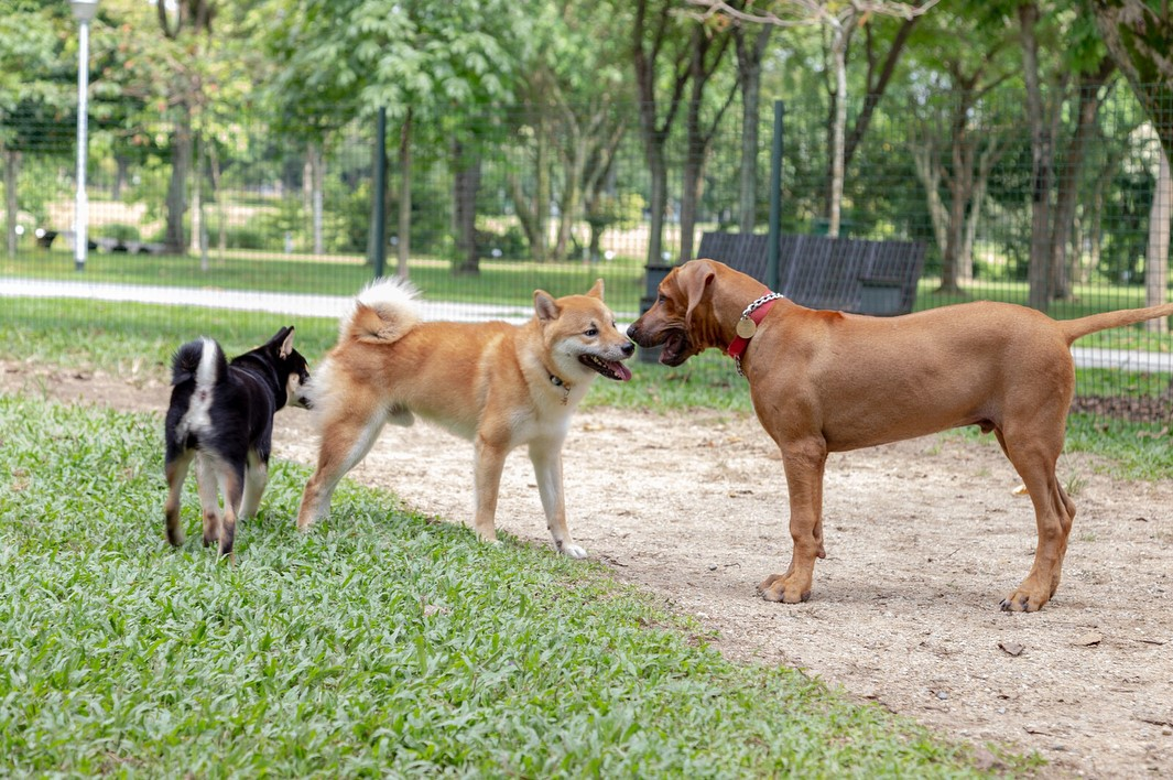 Who Let the Dogs Out? 5 Canine Runs to Explore With Your Pup