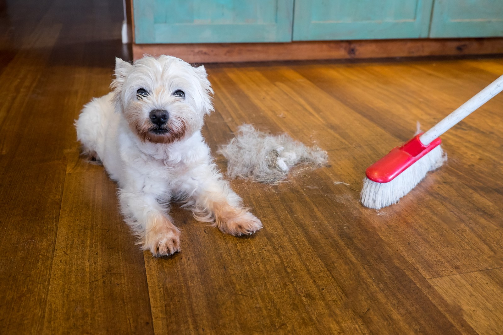 3 Ways To Prevent Flea Infestations At Home