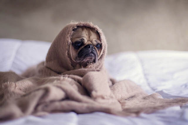 4 Common Signs of Illness in Dogs
