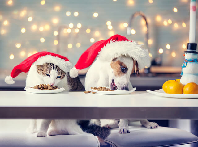 5 Festive Foods All Pets Should Avoid