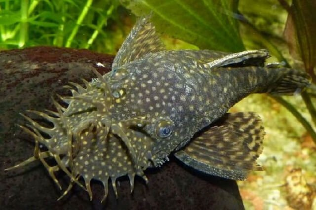 5 Fish Breeds for First-Time Fish Keepers