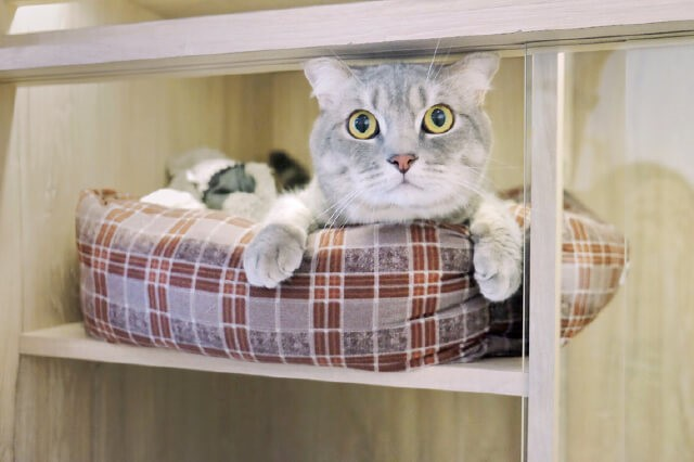 5 Questions to Ask a Pet Boarding House