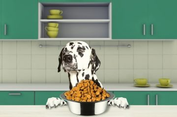5 Reasons Why Your Dog Isn't Eating