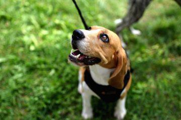5 Things You're Doing Wrong When Walking Your Dog