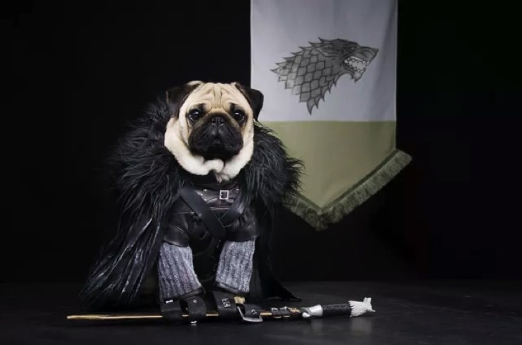6 Pet Costumes to Get Your Furkid Ready for Howl-o-ween