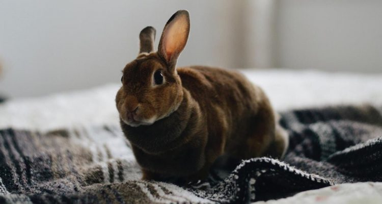 7 Common Signs That Your Rabbit Is Happy & Healthy