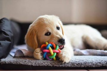 7 Must-Own Pet Products for Every Dog Owner