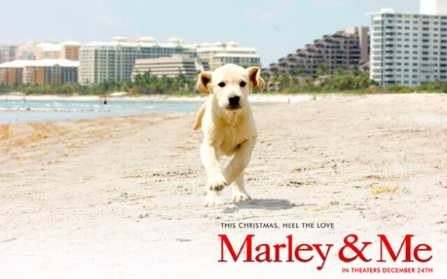 7 Must-Watch Movies for the Ultimate Animal Movie Marathon