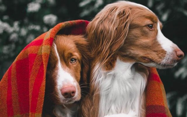 8 Animal IG Accounts to Follow for Your Daily Dose of Fluff