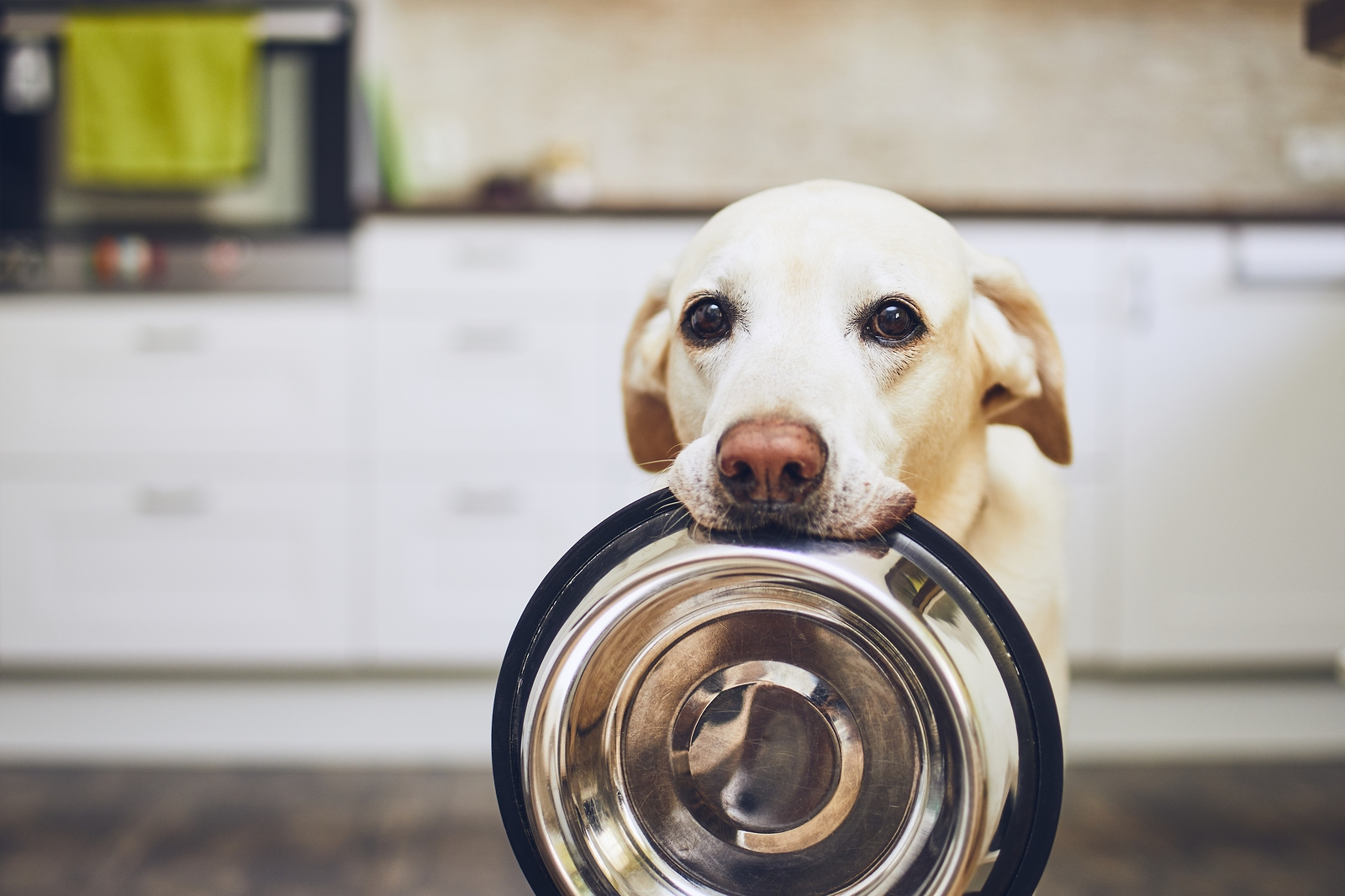 9 Common Human Foods That Is Surprisingly Good For Your Dogs