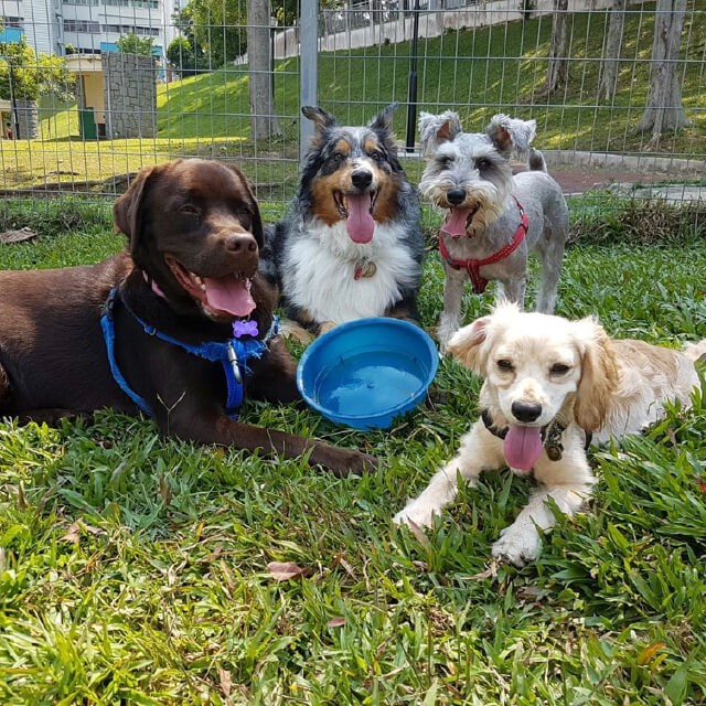 A Dog Owner's Checklist for Pet Boarding Services in Singapore