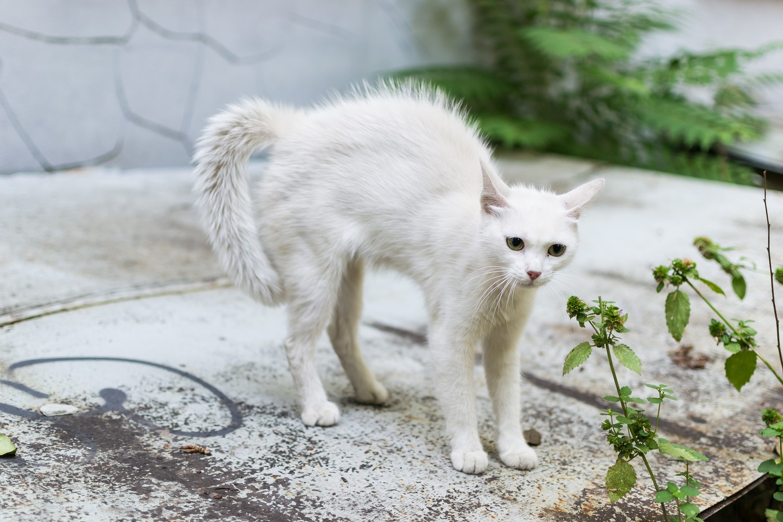 A Guide to Approaching Stray Cats Safely