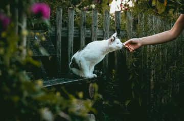 A Guide to Befriending a Feline
