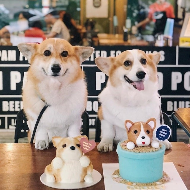 A Pawrent's Guide: 5 Hidden Pet-Friendly Cafés to Explore in the New Year