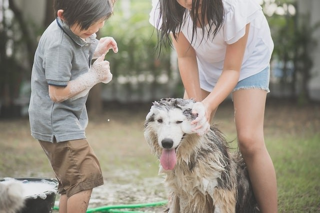 Canine Care: A Grooming Guide for Dogs of All Fur Types
